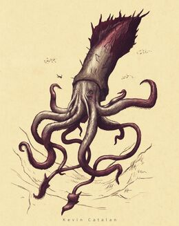 Kraken by Kevin Catalan©