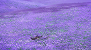 Cao Cao relaxing in the flower field