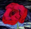 BlumenderHölle12