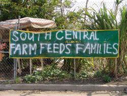 South Central Farm 2