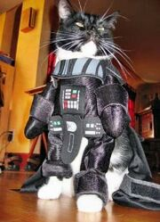 Kittyvader