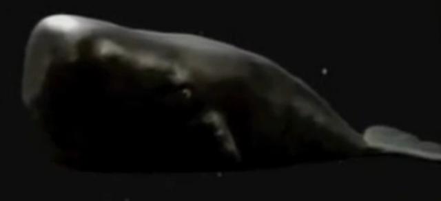 File:Magrathean whale-tv.png