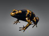 Смертельно ядовитая лягушка