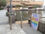 筲箕灣避風塘一號梯台
