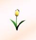 Tulip-yellow