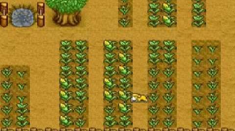 Harvest Moon Snes - Corn Ending