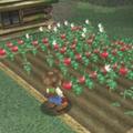 Crops Nav