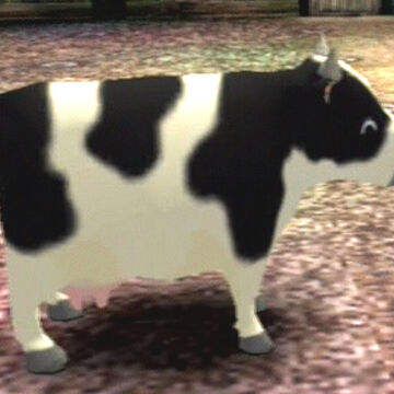 Do cows have to be pregnant to produce milk