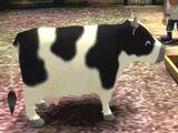 Cow (AWL)