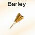 Barley-wheat