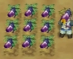 Il Eggplant