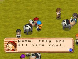 Degan Cow Festival HM64