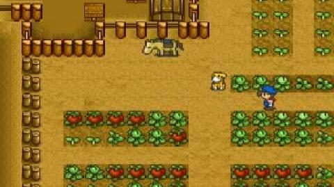 Harvest Moon Snes - Tomatoes Ending