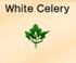 White-Celery