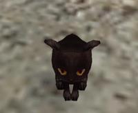 Awlcat1