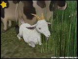 Goat (AWL)