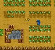 Crops 6