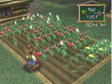 Crops (AWL)
