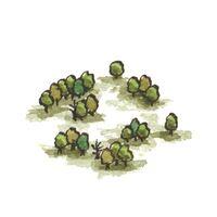 Fangorn3 (2)
