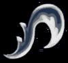 Icon HK Mantis Claw