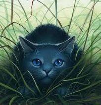 Bluestar-warrior-cat-16180327-220-229