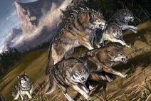 Dire wolf pack