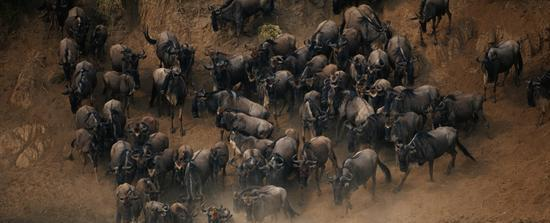 File:Herd.jpg