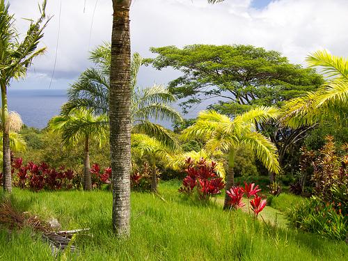 File:Garden of Eden.jpg