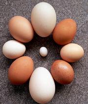 Eggcentric Circle