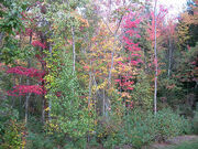 Backyard Fall Foliage