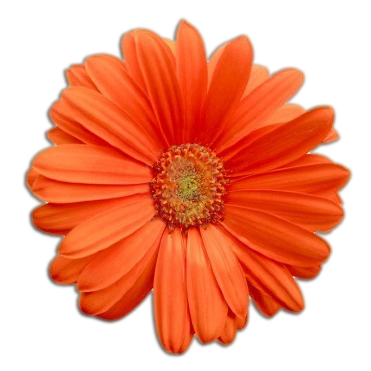 Image flowerg honeywarriors wiki fandom powered by wikia flowerg izmirmasajfo