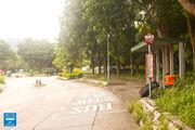 Wo Hing Road Fanling 20160615
