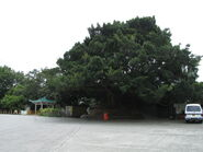 Ha Wan Tsuen 20130714-5