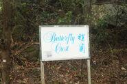 Cheung Sha Butterfly Rest 2