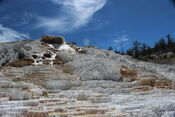 RL Mammoth Hot Springs 1