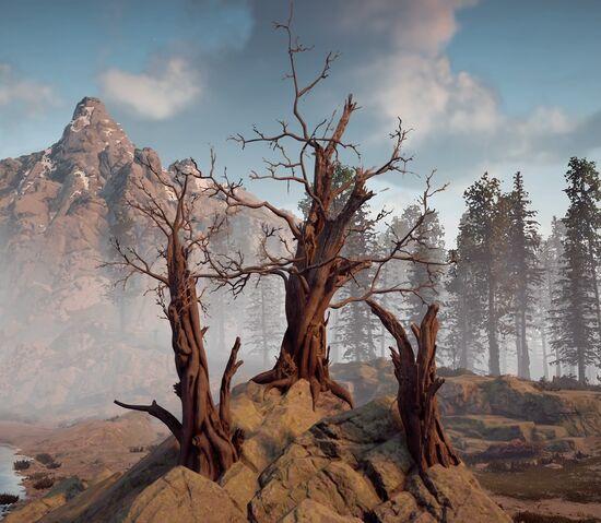 File:Three Dead Trees.jpg