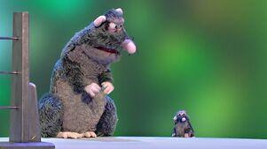 Scrappus Rattus