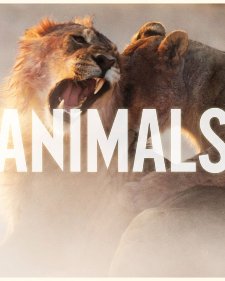 maroon 5 animals lyrics video download