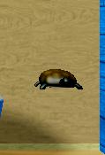 TurtlePet