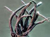 Spawn of Shub-Niggurath