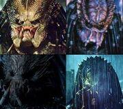 Predators unmasked
