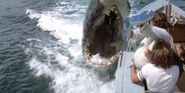 Jaws2 1