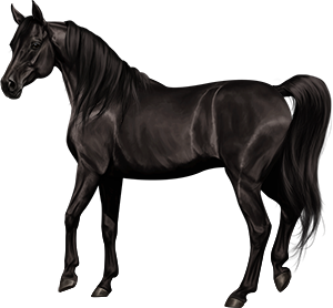 File:Arabian Mare Black.png