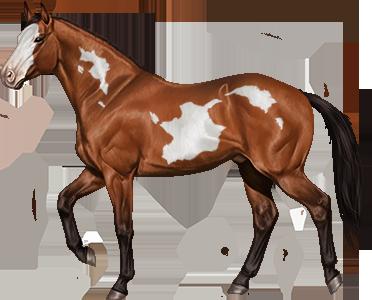 overo lethal white horse reality wikia fandom powered by wikia