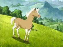 Mesa the little colt
