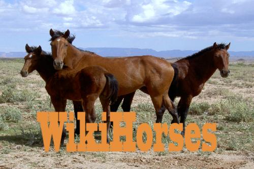 WikiHorses