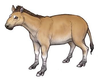 Mesohippus