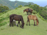 Misaki Horse