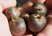800px-Potato fruits