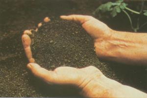 Soil hands small.jpg.w300h201
